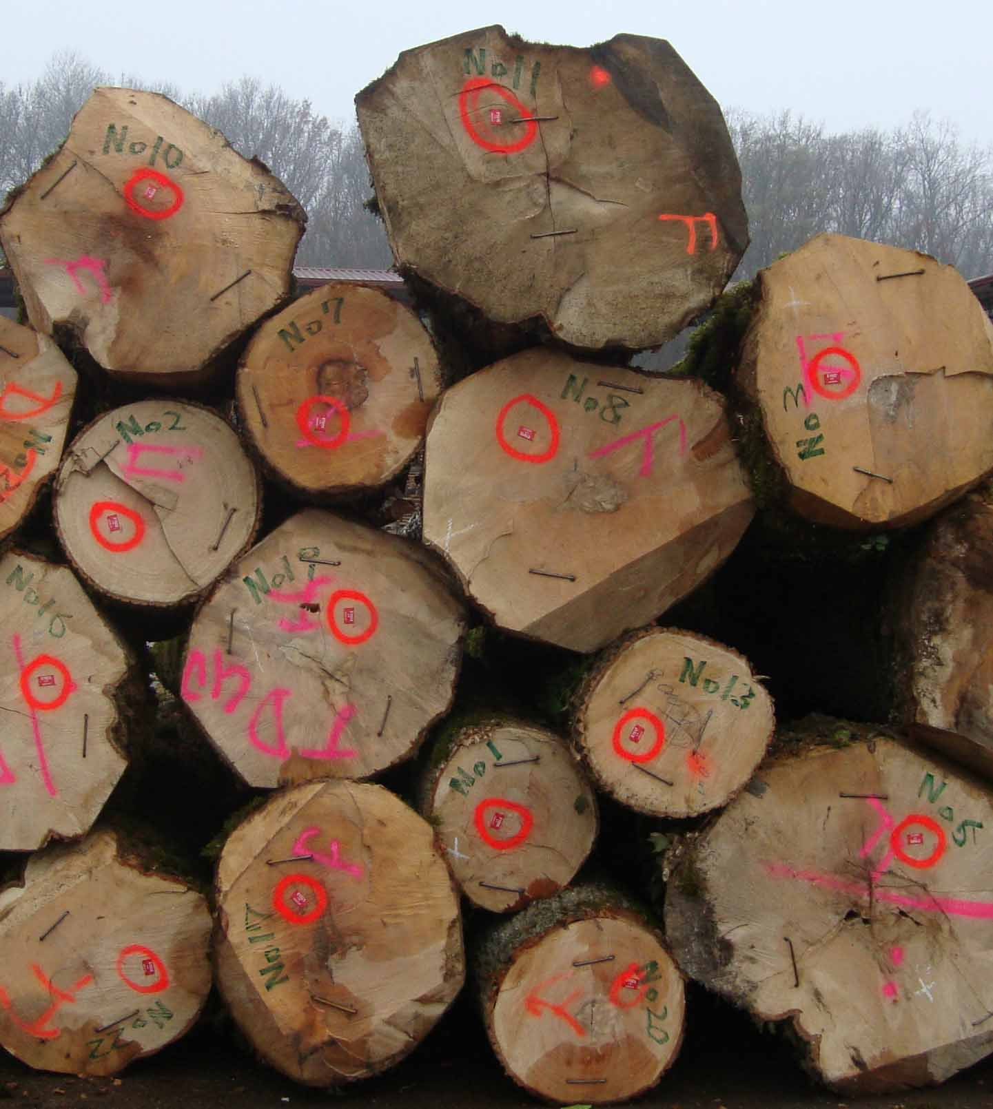 Croatian_wood
